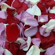 Rose Petals White And Purple Rose Petals