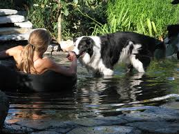 Cool Off With A Walk by Dog Pond Project U2013 Day 5 U2013 Done U2013 Nancy Tanner