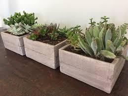 diy indoor succulent planters ellis u0026 page