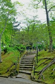 walkway path with green trees in forest beautiful alley in