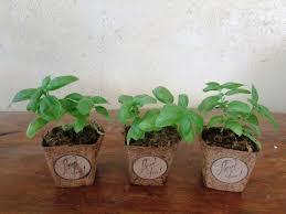 new eco friendly pots lorenzo s garden favorsearth friendly