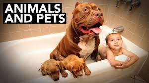 best of btv 2015 animals and pets youtube