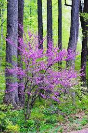 picture this photo contest for july flowering trees