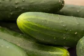 Cucumber Spacing On Trellis How Far Apart Should I Plant Cucumbers Hunker