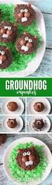 best 25 the groundhog day ideas on pinterest preschool