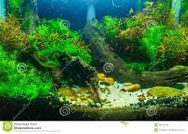 aquascaping planted aquarium stock photos images u0026 pictures 71