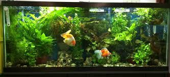 10 gallon planted tank led lighting aquarium lights lighting which to choose fish beginner