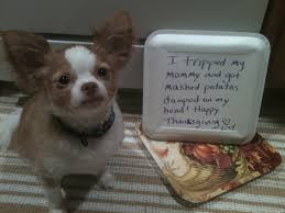 20 hilarious shaming photos of dogs who may thanksgiving
