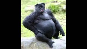 Funny Pug Memes - funny pug memes youtube