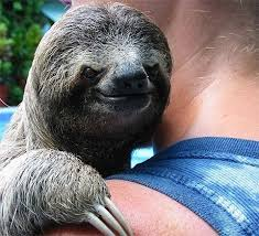 Sloth Meme Generator - evil sloth blank template imgflip