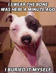 Stoned Dog Meme - 50 funny dog memes you need to see