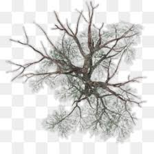 tree maple twig japanese maple tree top png 632 558