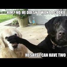 Funny Animal Memes Tumblr - cute animal memes tumblr