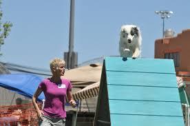 4 corners australian shepherd club australian shepherd a doggie bloggie
