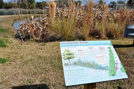 fort pond native plants experts devising ways to make stormwater ponds more natural