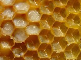 honeycomb edible honeycomb