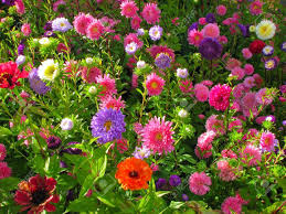 garden bed full of brightly coloured flowers stock photo picture