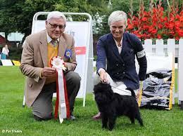 affenpinscher uppf are sydskånska kennelklubbens internationella hundutställning 2013