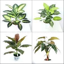 plants that need low light best indoor trees low light good indoor plants flowering indoor
