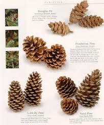 25 unique types species ideas woodworking wood