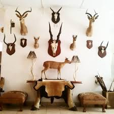 Quill Desk Lamp Bulawyo Showroom Antler And Horn Trophy Plaques Kudu Horn Lamps