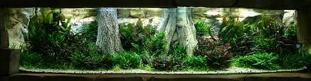 Aga Aquascape Ada International Aquatic Plants Layout Contest 2005 Info Page 7