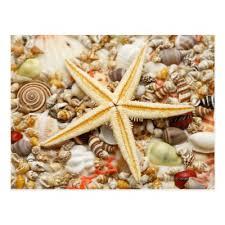 Assorted Seashells Starfish And Assorted Seashells 2 Postcard Zazzle Com