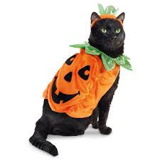 Pet Cat Halloween Costume Petco Pumpkin Halloween Cat Costume Put