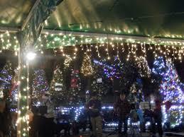 folsom zoo christmas lights 2017 the bears picture of folsom city zoo sanctuary folsom tripadvisor