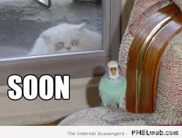 Hilarious Cat Memes - funny cat pics when the wild kitty cats take control pmslweb