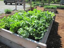 our kitchen gardens flourish grow compost of vermont