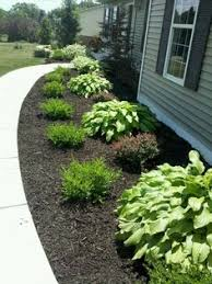 cheap basic plants gardening pinterest plants landscaping