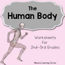 the human body worksheets mamas learning corner