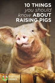 10 things about raising pigs you won u0027t read in books