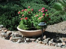tips for planting a successful winter garden in tucson santa
