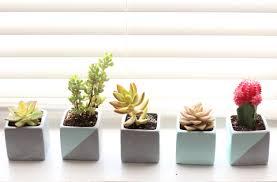 design evolving painted succulent planters design evolving