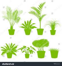 house indoor plants pots set vector stock vector 296367878
