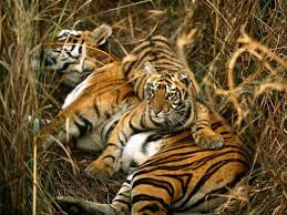 Alabama wild animals images Should you pet a tiger groups want exotic animal encounters like jpg
