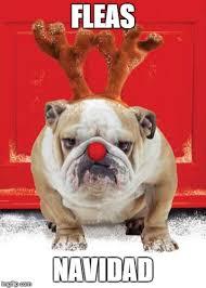 Christmas Dog Meme - christmas hound imgflip