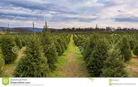 christmas tree farms in va christmas lights decoration