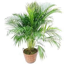 plante d駱olluante chambre pour plante d interieur depolluante chambre idées pour la maison