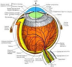Blind Spot In Left Eye Ian Hickson U0027s Description Of The Eye