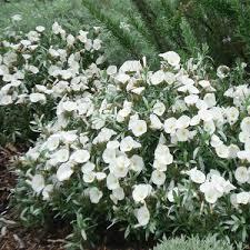 Flower Shrubs For Shaded Areas - go gardening helping new zealand grow garden inspiration tips