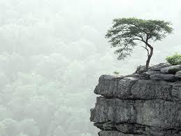 mountain tree wallpaperart