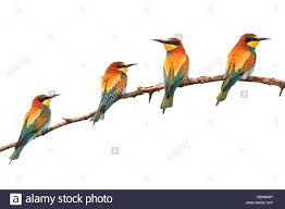 paradise colored birds sitting on a branch isolated on stock photo