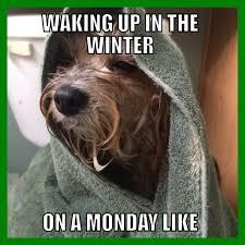Popular Funny Memes - astonishing sofia winter monday mornings dog meme funny animals of