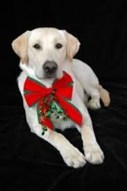 19 christmas cards ideas for your pets christmas cards cards