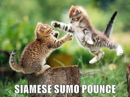 Cat Fight Meme - lolcats kitten lol at funny cat memes funny cat pictures