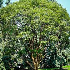 the tree center is the best place where you can buy beautiful and