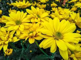 free photo blooming flower free image on pixabay 2809513